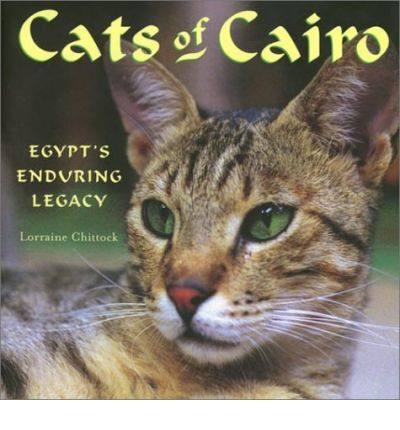 Cats of Cairo
