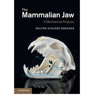 An analysis of skull and jaw