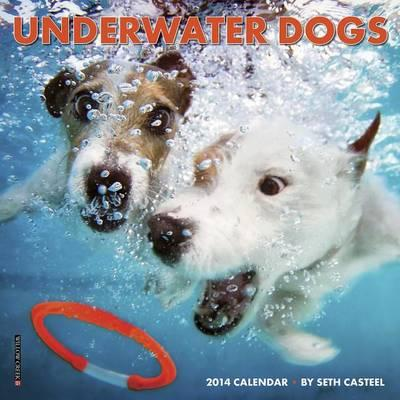 Underwater Dogs Mini Wall Calendar